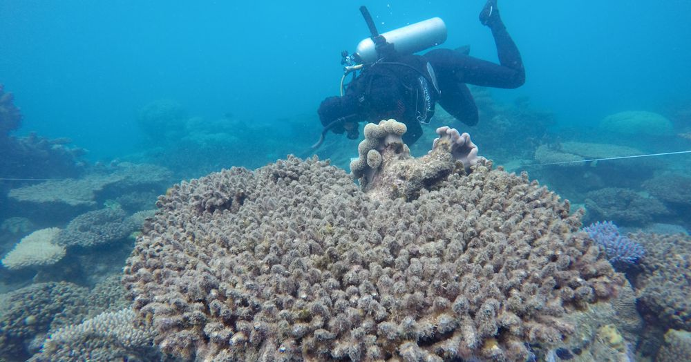 Coral reefs are bleaching way more frequently because of global warming