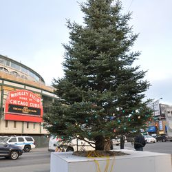 Another view of the Cubs holiday tree with the lights on the ground waiting to be put up