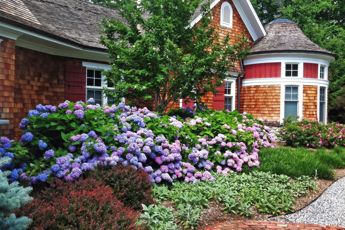 15 Low Maintenance Shrubs This Old House