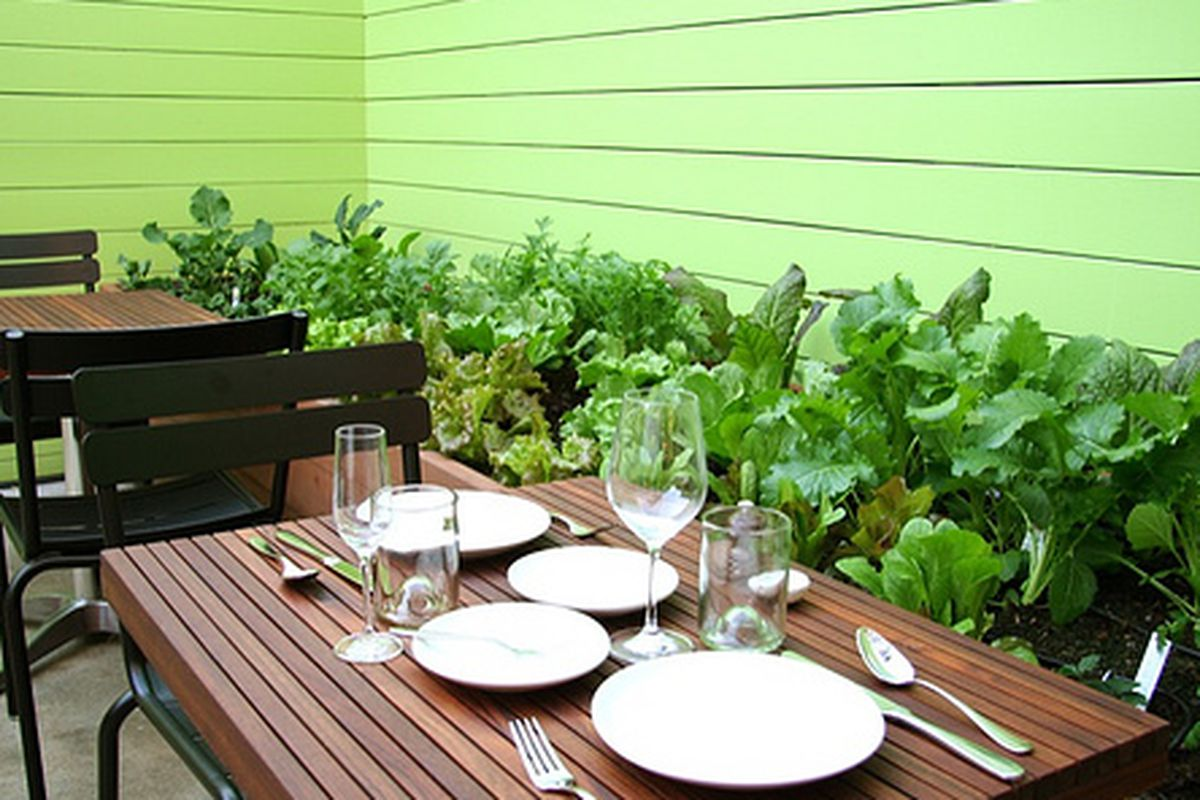 Contigo's back patio and vegetable garden.