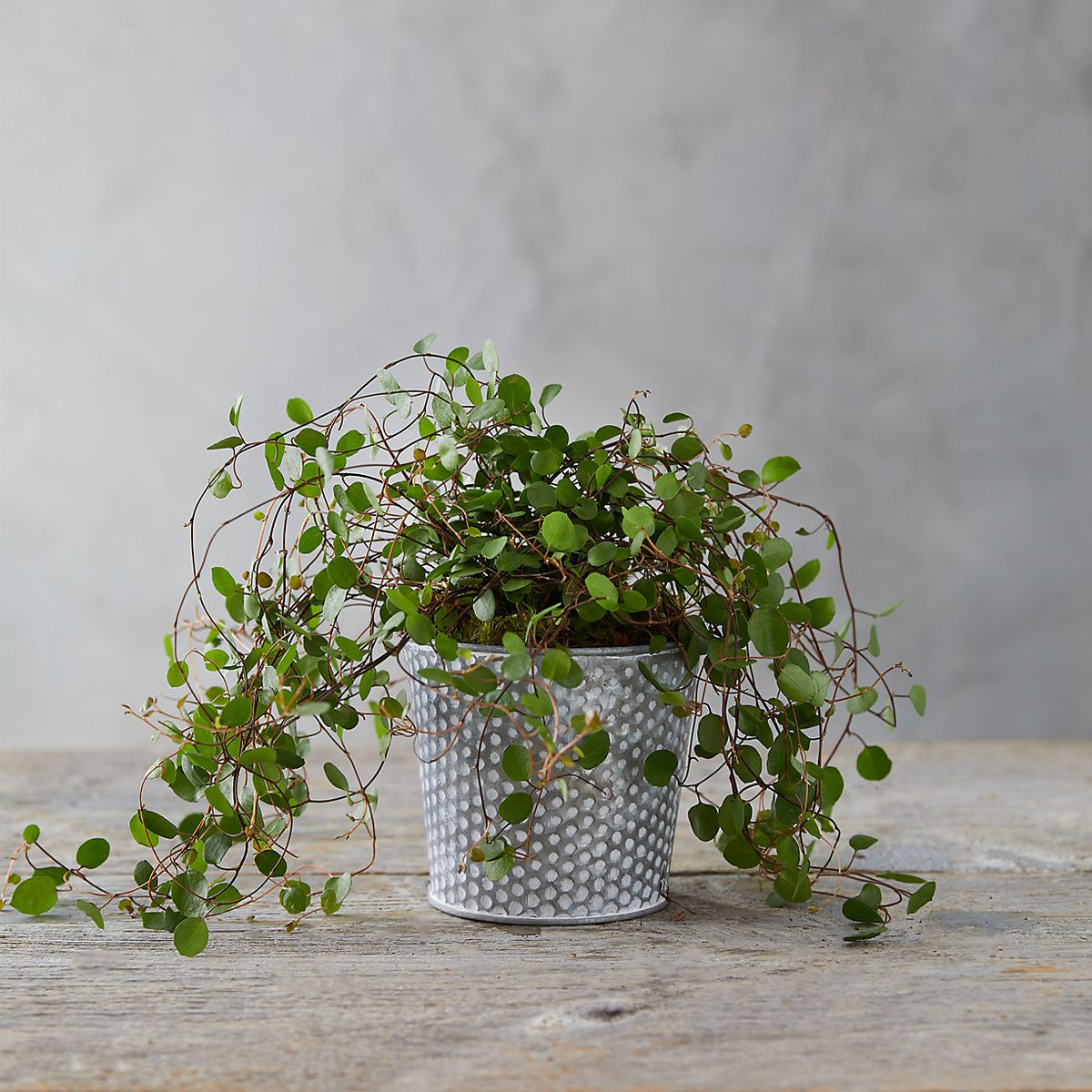 Buy indoor plants online at these stores - Curbed on non toxic house plants, allergy house plants, long lasting house plants, durable house plants,