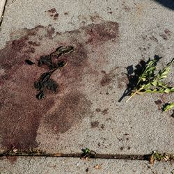 Blood spills remain on the sidewalk from a shooting scene in the 2200-block of South Broadmoor st in Salt Lake City where one person died on scene and another was transported to the hospital in critical condition, Sunday, Sept. 26, 2021.