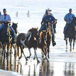 Volunteers with the Saltwater Cowboys walk wild ponies and foals from the northern herd along a beach on Assateague Island, Va., to pens where they will rest and be given a vet check before their swim to Chincoteague Island on Monday, July 22, 2019.