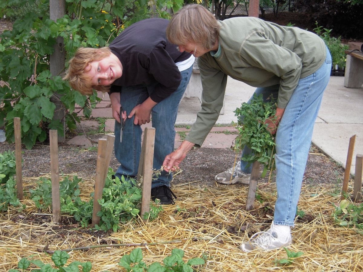 Rider Spangler works with Judy Douglas, a volunteer adult gardener, to cut back the early-season peas and prepare the bed for a new crop.