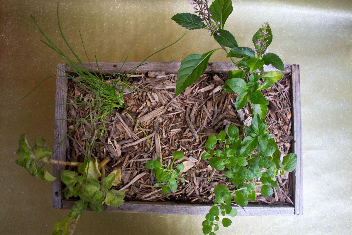 Herb planter from La Flaca