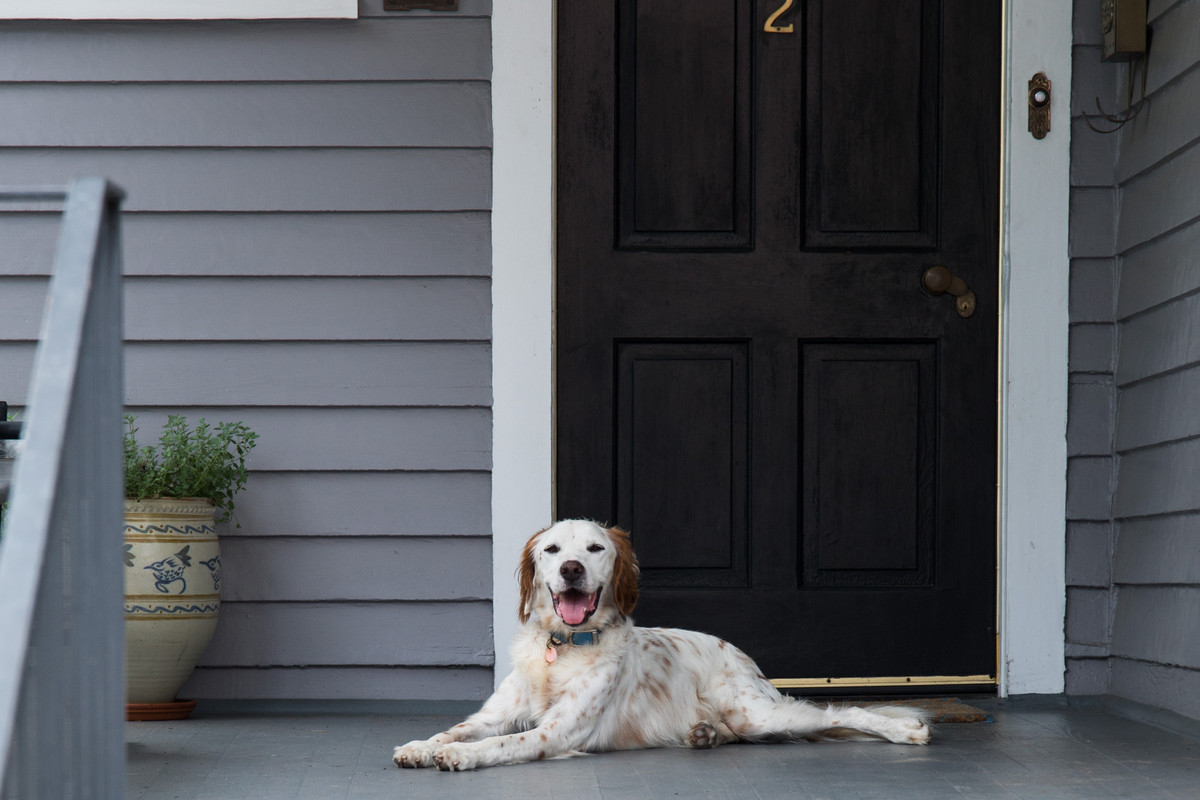 A white dog sits on a grey front porch by a black door and light brown planter.