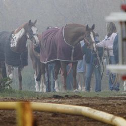 Horse owners work to remove their horses from Black Tie Stable in McHenry, Ill., Wednesday, April 11, 2012 after a fire destroyed the facility Wednesday evening. Ten horses were killed in the fire.