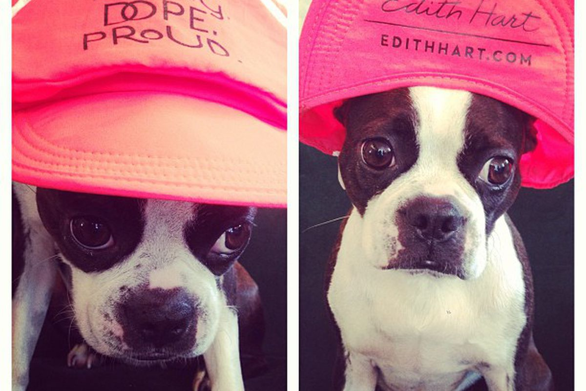 """<strong>Iyla</strong> the Boston Terrier models a <strong>Cap-sac </strong>with<strong> Lana Del Rey</strong>'s mantra, """"Young.Dope.Proud."""" on the rim. The cap is free with a $100 purchase at <a href=""""http://edithhart.com/""""><strong>EdithHart</strong"""