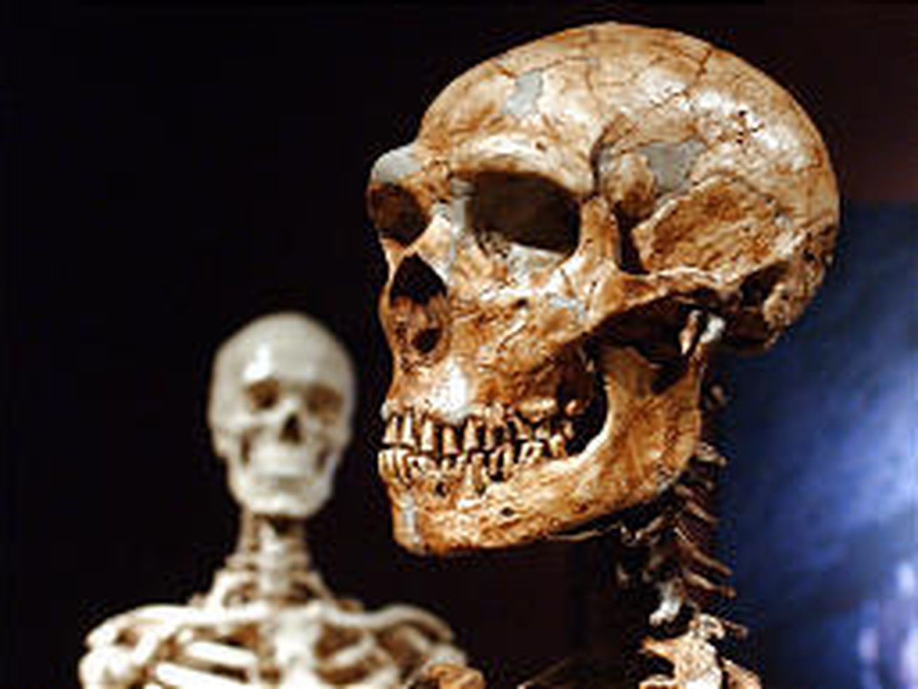 DNA traces of unknown ancient human species found in West Africa