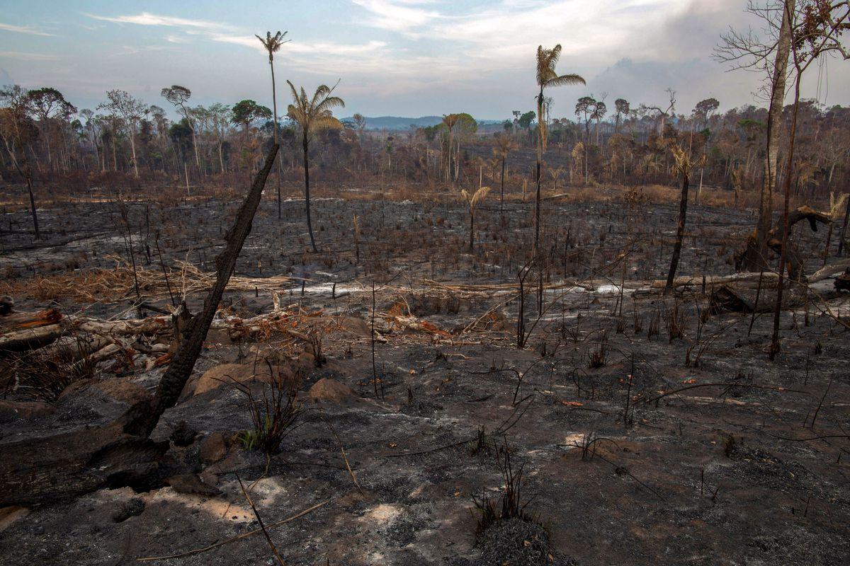 Amazon Rainforest Fire The Worst Case Scenario Is Uncomfortably