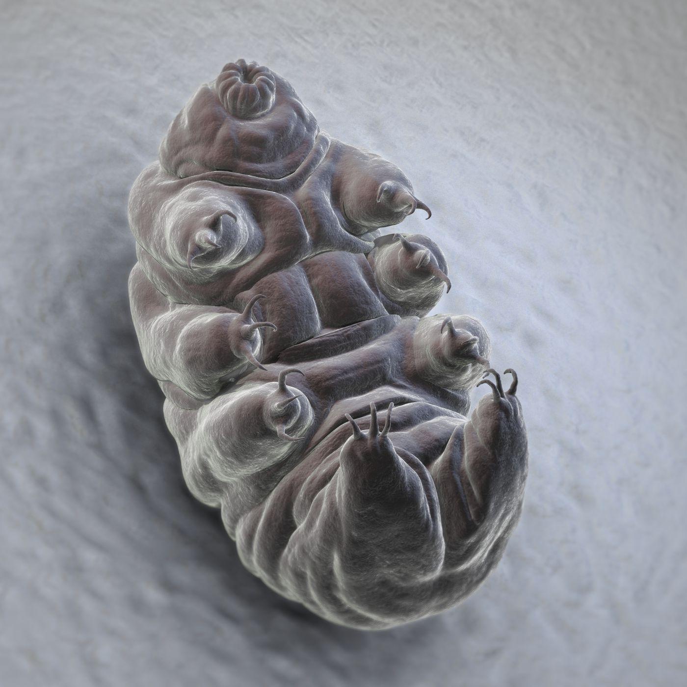 Tardigrades Explained Vox
