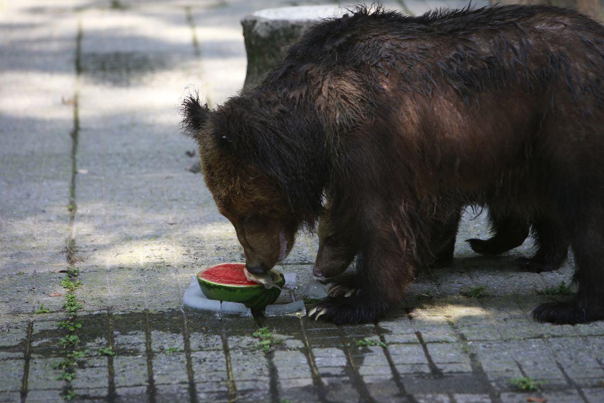Animals Avoid Hot Weather In Chongqing