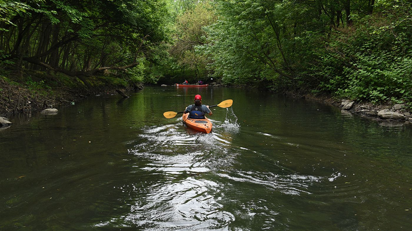Canoeing Along the Restored Bronx River - Curbed NY