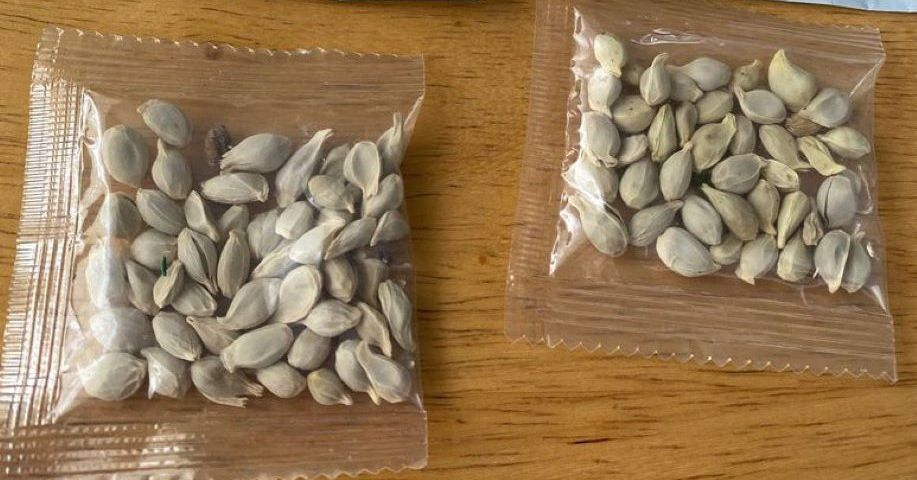 Amazon bars foreign sales of plants to the US following deliveries of mystery seeds thumbnail