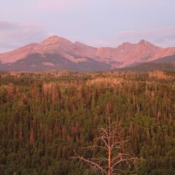 The effects of drought on global forests last longer than researchers previously thought and are described in a study released Thursday, July 29, 2015, in the journal Science.