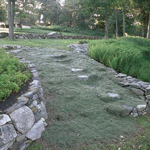 """<p>A steep slope in her Maine backyard led homeowner Barbara Feller-Roth to devise a dramatic solution—wide granite steps planted with wooly and creeping thymes. """"I didn't want to have to mow uphill,"""" she says.</p>"""