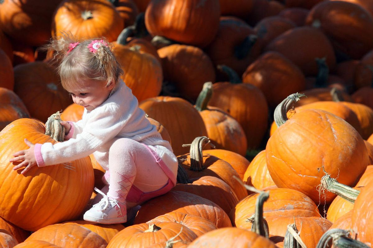 FILE - Two-year-old Sydney McGuire explores the pumpkin patch during a scarecrow festival at Thanksgiving Point in Lehi Thursday, October 11, 2007. Thanksgiving Point is gearing up for Halloween with two signature events — the annual Scarecrow Festival an