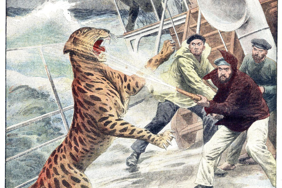 a jaguar on the deck of liner Altai, during crossing Colombo-New York : panicked because of the storm he managed to get out from his cage, lastpage of newspaper Petit Journal november 28, 1909