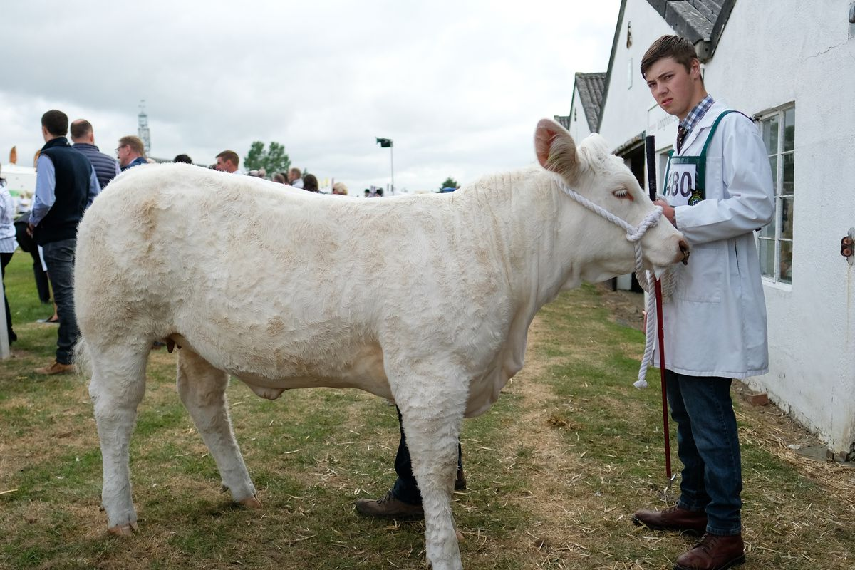 The Great Yorkshire Show Opens To The Public