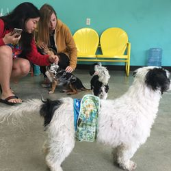 All the dogs have been deemed people-friendly, which means petting is encouraged!