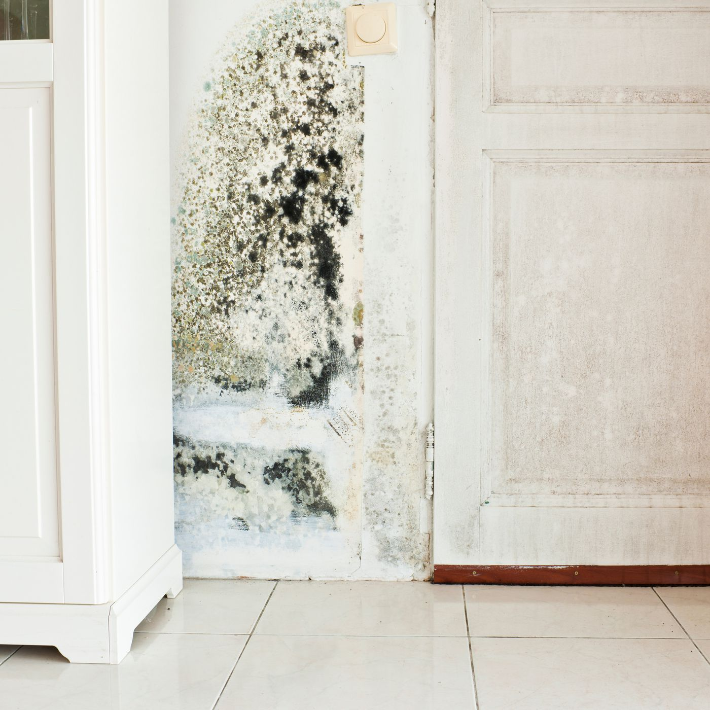 How To Test For Black Mold This Old House