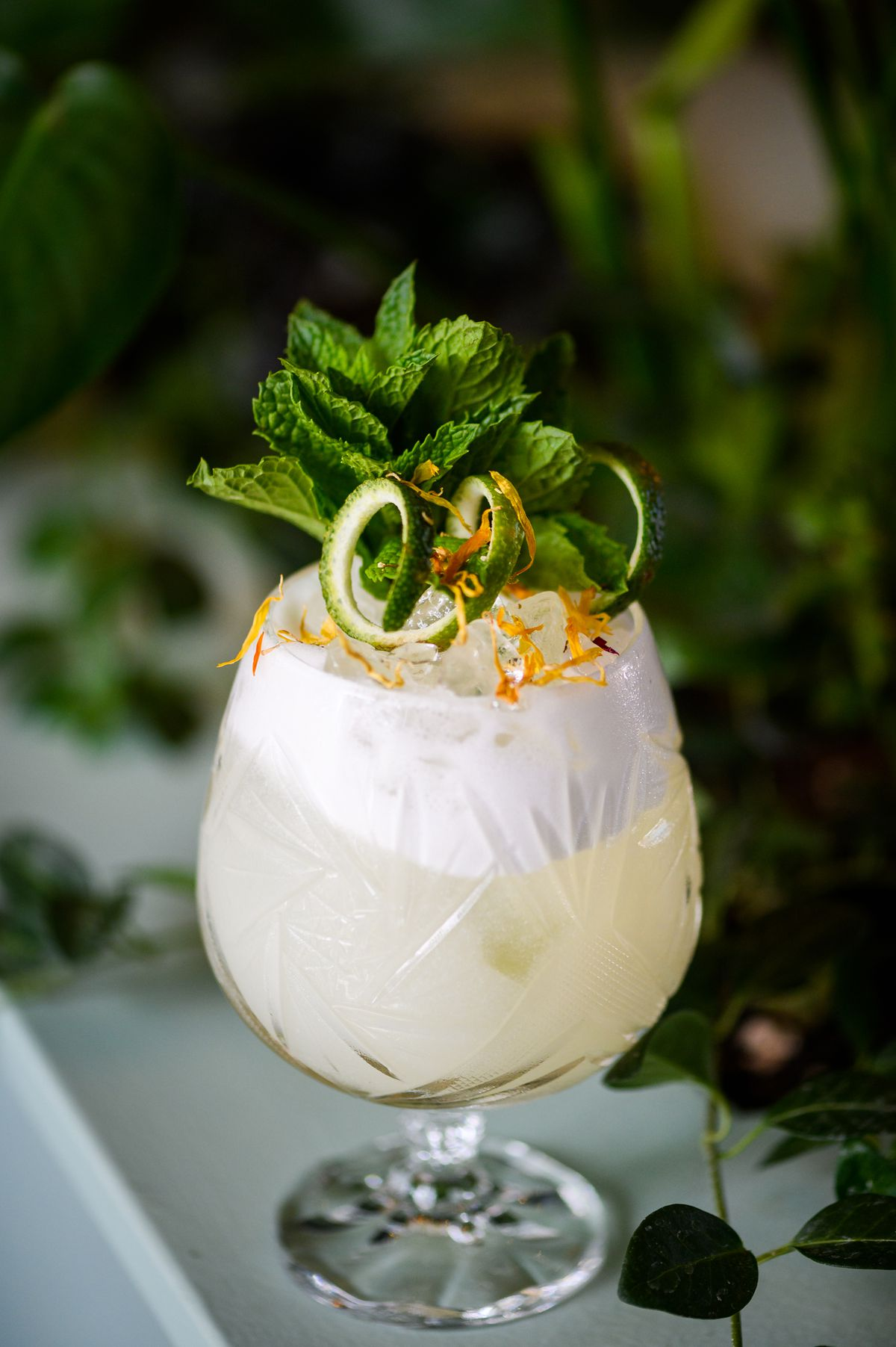 A short goblet holds a creamy white cocktail, topped with lemon peels, lime peels, and a bushel of mint