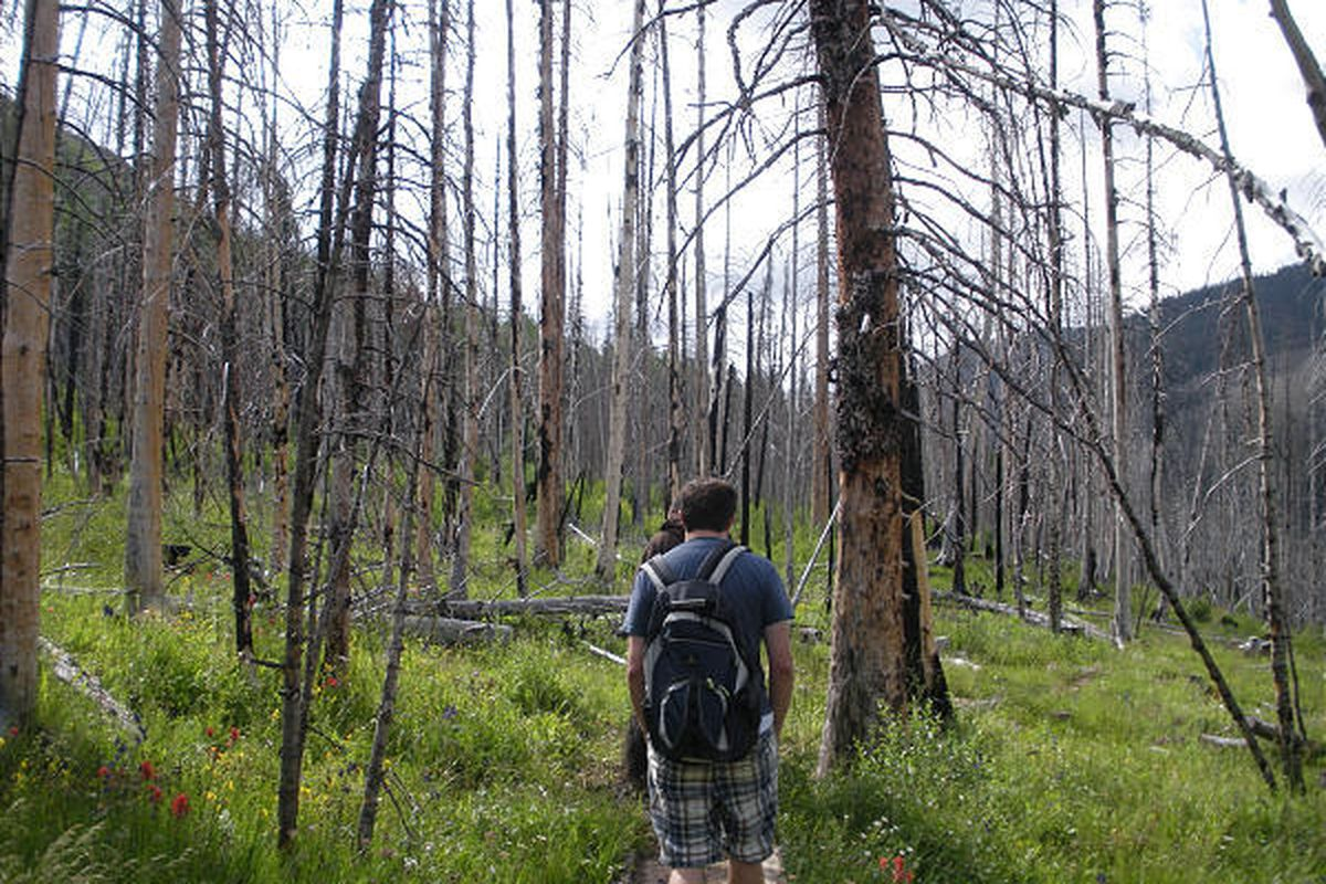 Hikers travel along the early portions of the East Fork of the Bear River trail in the High Uintas, where a 2002 fire blackened trees.
