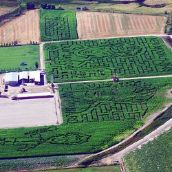 Patterns have been cut in the corn at Black Island Farms in Syracuse.