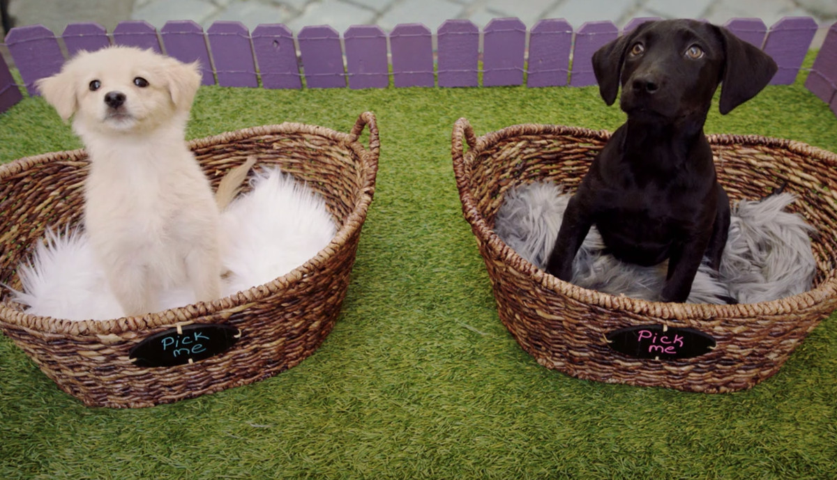 A beige puppy and a black puppy, each sitting in a basket