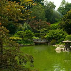 """<b>↑</b> Take some coffee to go and stroll over to the <b><a href=""""http://www.bbg.org/"""">Brooklyn Botanic Garden</a></b> (150 Eastern Parkway). Take advantage of the last few weeks of non-winter weather and wander the Japanese pond, herbal gardens and cher"""