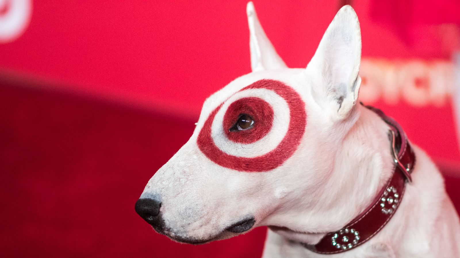 Recode daily target settles its massive security breach What kind of dog is the target mascot