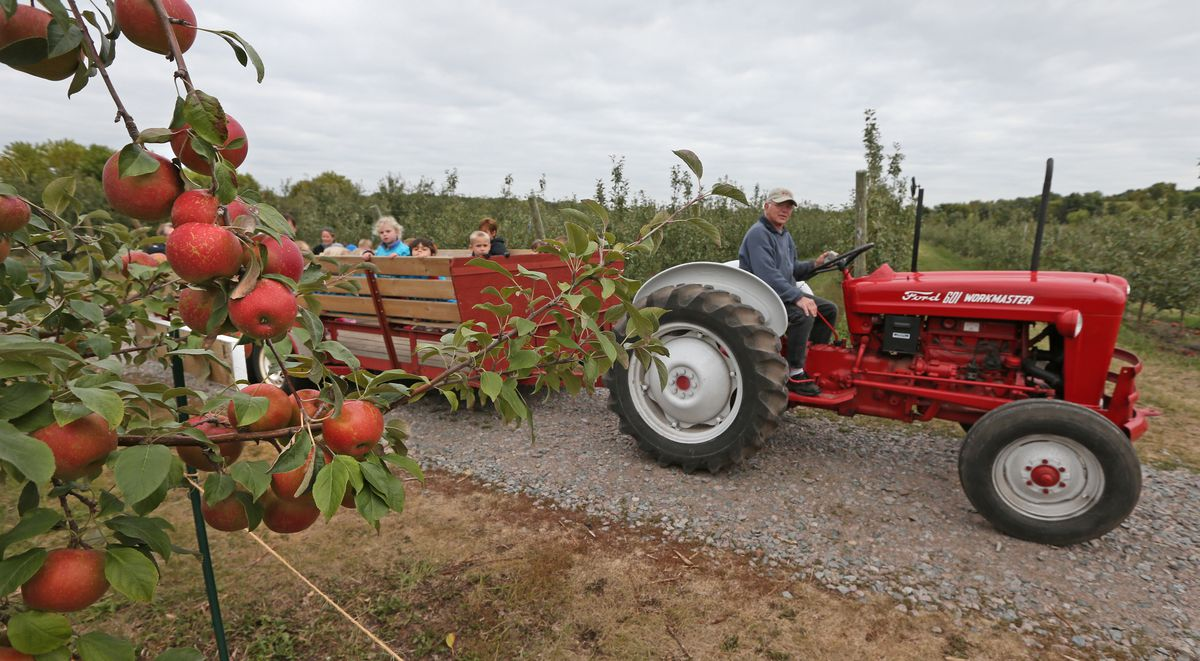 A tractor pulls a cart of tourists down a lane between apple orchards.
