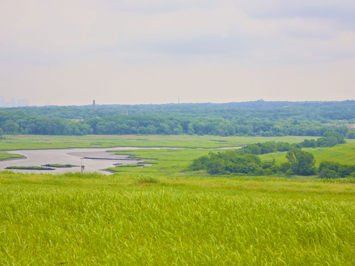 A vibrant green hill overlooks Staten Island wetland with streams carving through the green landscape.