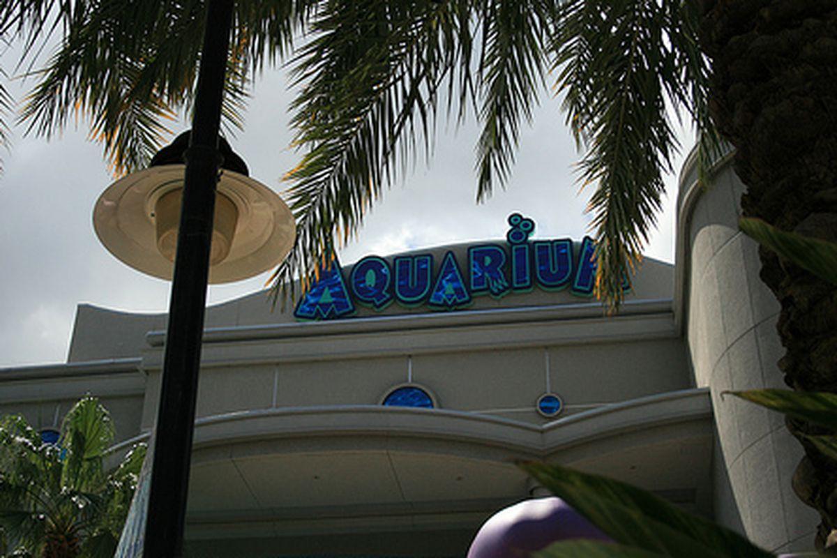 The Aquarium downtown.