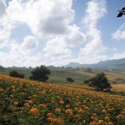 The Farmland biome.
