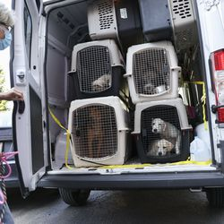 Dogs in kennels for transport arrive from shelters in Louisiana in the path of Hurricane Ida at PAWS Chicago Medical Center at 3516 W. 26th Street in Little Village.