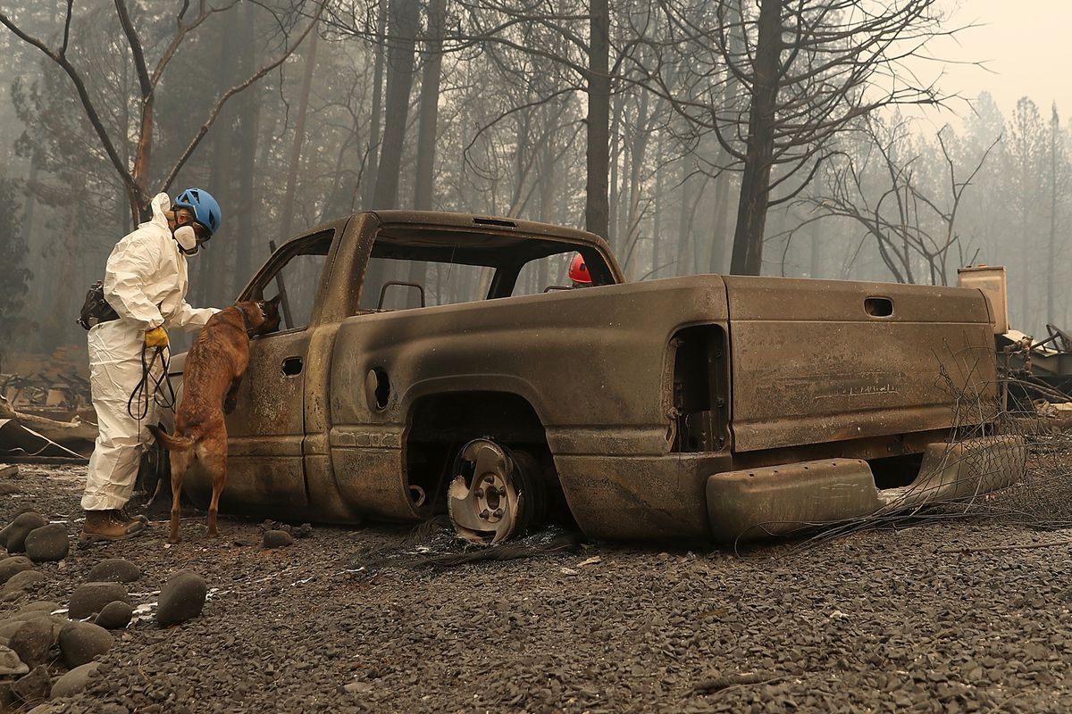 A rescue worker and cadaver sniffing dog search the remains of a mobile home park in Paradise.