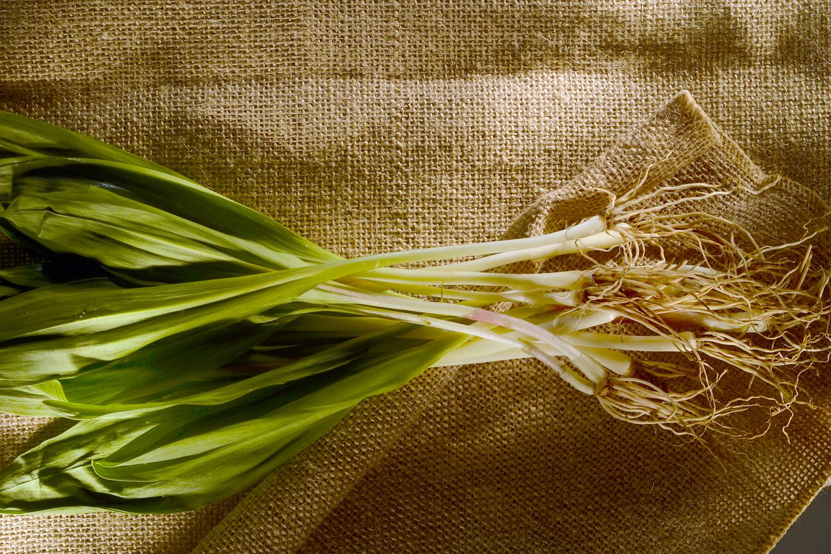 Everything You've Always Wanted to Know About Ramps - Eater