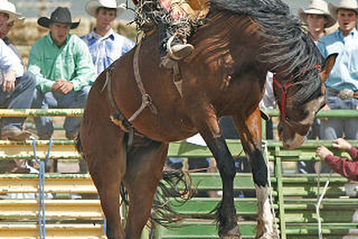 Milford's Spencer Wright hangs on during the saddle bronc riding at the high school rodeo finals Wednesday.
