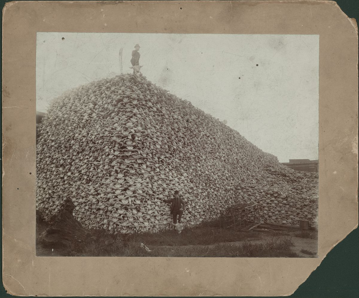 """Man stands on top of enormous pile of buffalo skulls; another man stands in front of pile with his foot resting on a buffalo skull; rustic cage is at foot of pile. Handwritten on back: """"C.D. 1892 Glueworks, office foot of 1st St., works at Rougeville, Mich."""""""