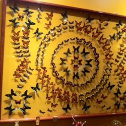 A peruvian butterfly collage from the last century