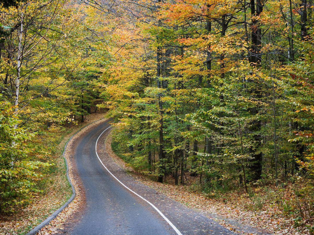 A road lined with trees that have colorful autumn leaves in Michigan.