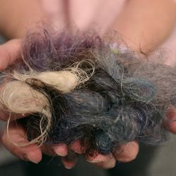 Lisa Knapp holds a clump of her hair that has fallen out within the bathe over the course of the previous six weeks at dwelling in Provo on Monday, Nov. 23, 2020, the 141st day since her <a href=