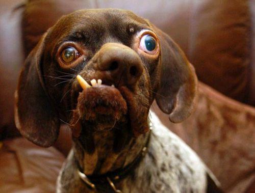 Mike Ricci Dog Face 2