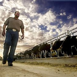 Dairy farmer Ron Gibson walks back to his truck after releasing the cows from the mangers as he talks Wednesday, Aug. 29, 2012, about the hardships that this season has brought on.