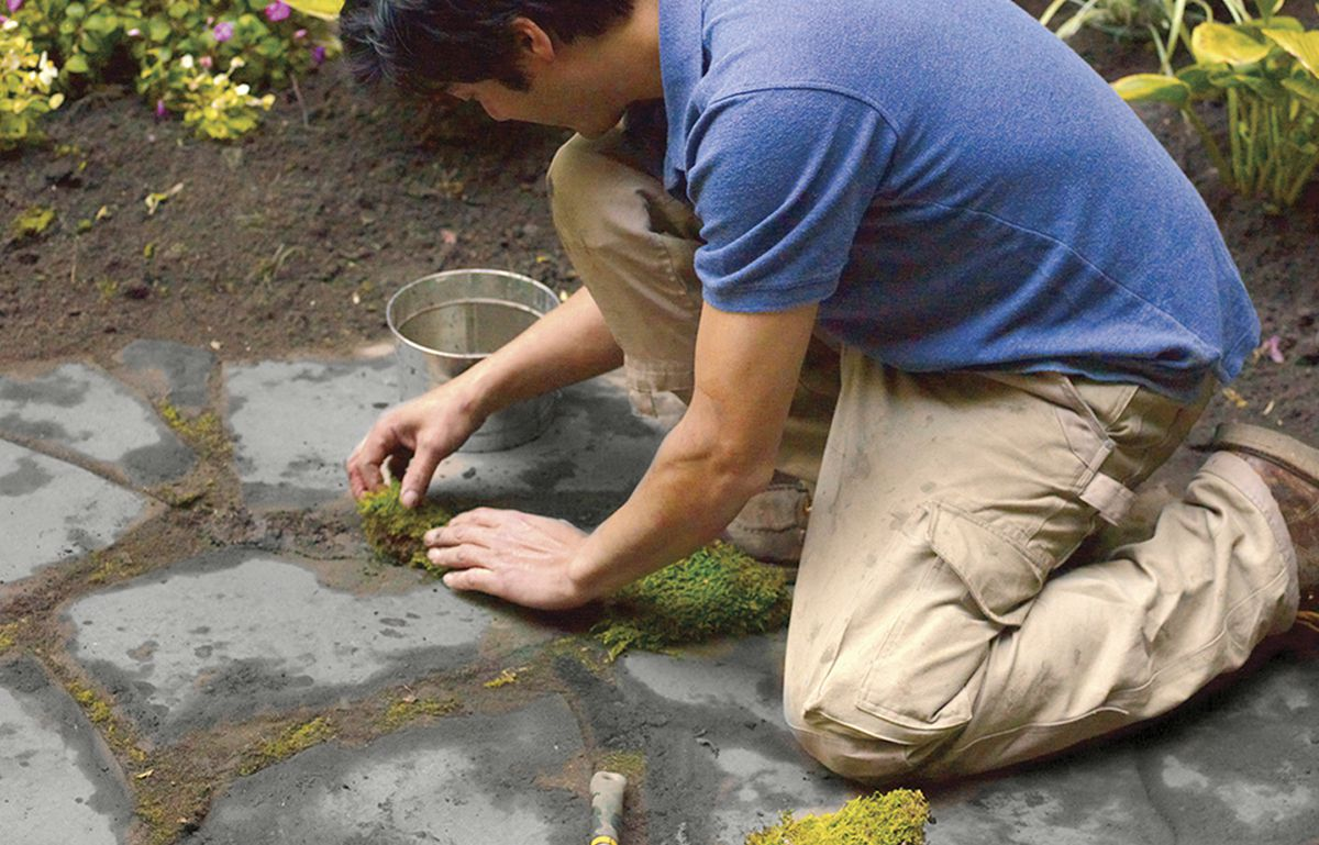 Man Fills Joints With Moss For Bluestone Patio