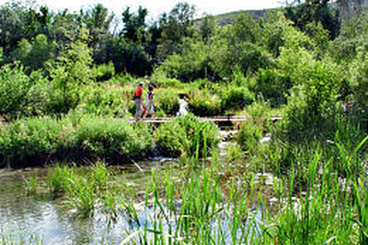 Numberous bridges take visitors around Cascade Springs, located in the heart of the Uinta National Forest.
