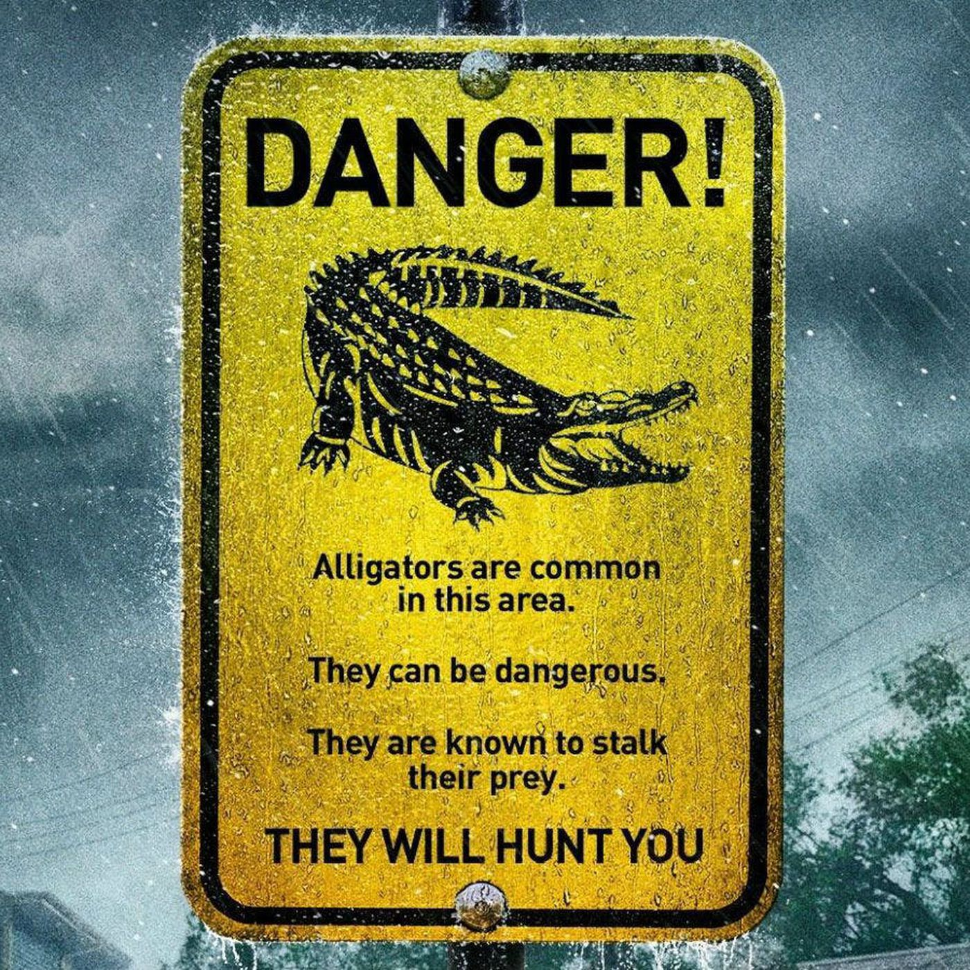 Crawl Review Best Alligators Attack In A Hurricane Disaster Movie Ever Polygon