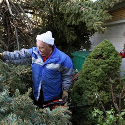 Ted Crandall helps clear fallen trees from the home of his neighbor Shan Stott, right, following a wind storm in Layton, Thursday, Dec. 1, 2011.
