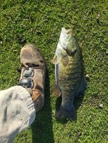 Catching smallmouth bass on the Chicago lakefront and measuring them by the foot. Provided by Ken Maggiore